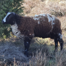 (Klein) vee